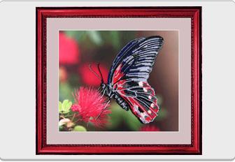 """Набір для вишивання бісером """"Метелик"""" ... ad261de3b68b5"""